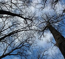 Tall Trees in Spring 10 by marybedy