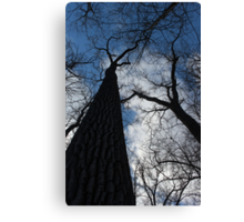 Tall Trees in Spring Canvas Print