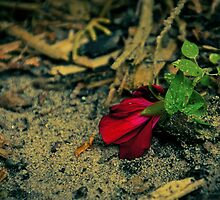 Single Red Flower by Rebecca Caspers