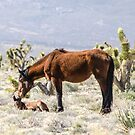 Foal Born Thursday 3.21.13 by Darcy Grizzle