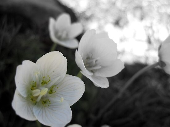 Swiss Flowers by Helen Morton