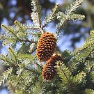 Fir Tree Cones by decorartuk