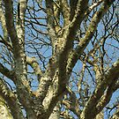branches by millymuso
