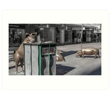 Rundle Mall - Rundle Mall Pigs   Art Print