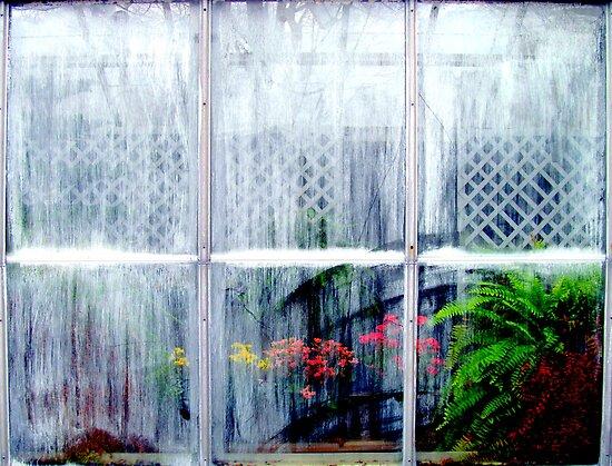 Dirty Window by David Schroeder