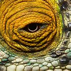 Chameleon Eye by CharlotteMorse