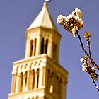 Spring's Return - St. Duje Cathedral Belltower, Split, Croatia by Tricia Mitchell