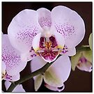 Orchid. by naranzaria