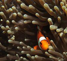 Nemo by randi83