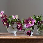Helleborus by Justine Gordon