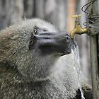 Water on Tap by CharlotteMorse