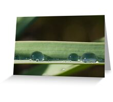Spring drops Greeting Card