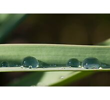 Spring drops Photographic Print