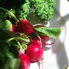 Radishes, Kale and Collard Greens On a White Plate by Arteffecting