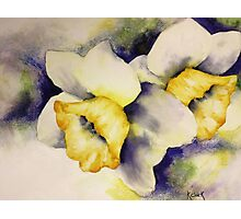 """""""Daffodils in Spring"""" Photographic Print"""