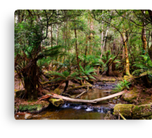 Fern Glade at Russell Falls Canvas Print