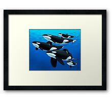 Pod of Orcas Framed Print