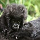 Baby Mountain Gorilla by CharlotteMorse