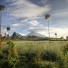 Early Morning in Rwanda by CharlotteMorse