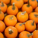 Miniature Pumkins by Arteffecting