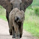 I CAN&#x27;T WALK FASTER! THE AFRICAN ELEPHANT  Loxodonta Africana - Afrika Olifant by Magaret Meintjes
