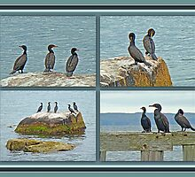 Double-crested Cormorant          Phalacrocorax auritus  by MotherNature