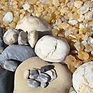 Petrified Driftwood Art Prints Beach Agates Rocks by BasleeArtPrints