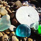 Beach Rock Garden Art Prints Seaglass Sand Dollar by BasleeArtPrints