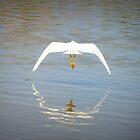 Snowy Egret ~ Farewell Flight by Kimberly Chadwick