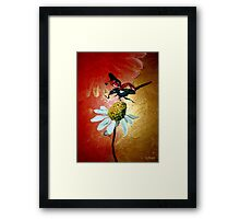 Ladybird Landing on Daisy Framed Print