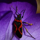 Small Milkweed Bug on Spring Crocus #1 by Kane Slater
