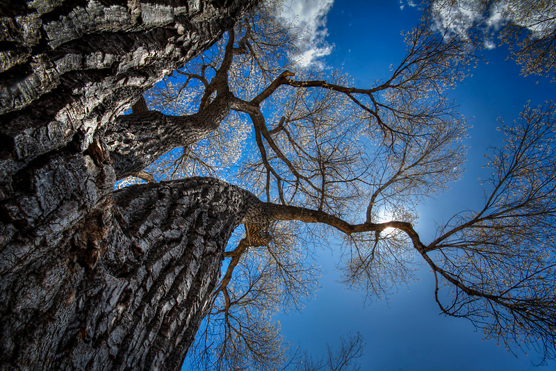 Bark and Blue by Bob Larson