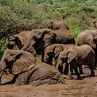 Bath Time! Lake Manyara National Park, Tanzania by Sue Ratcliffe