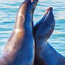 Sea Lions at Pier 39 by Yukondick
