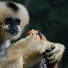 Monkey Buisness by Kathryn Potempski