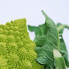 Romanesco by jojobob