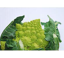 Romanesco Cauliflower Photographic Print