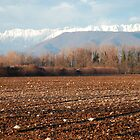 Friuli Winter Field by jojobob
