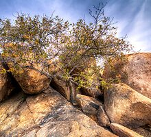 Life Finds A Way by Ray Chiarello