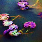 *Monetish Lily Pads* by DeeZ (D L Honeycutt)