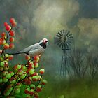 The Hecks Shaftail Finch by swaby