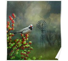 The Hecks Shaftail Finch Poster