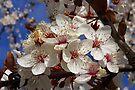 buncha blossoms by dedmanshootn
