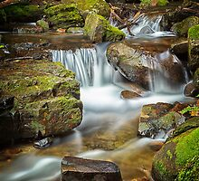 Below Strickland Falls, South Hobart, Tasmania #7 by Chris Cobern