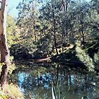 Koreelah Creek NSW by Albert