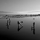Salton Sea Early Morning  by photosbyflood