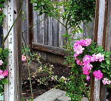 Pink Climbing Roses by PrettyLilly