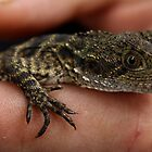 Baby dragon by Joel Fourcard