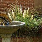 Fun In The Bird Bath by Pat Moore