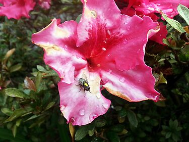flies flowers pink green
